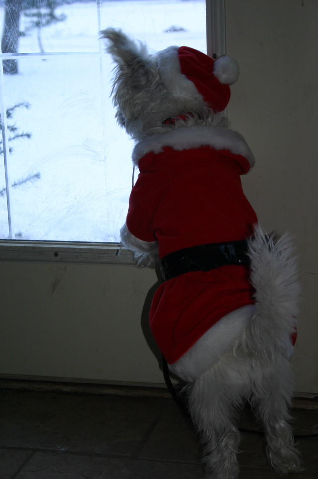 santa-paws.JPG